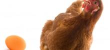 Anhebung der MwSt.-Verrechnungssätze für einige landwirtschaftliche Erzeugnisse